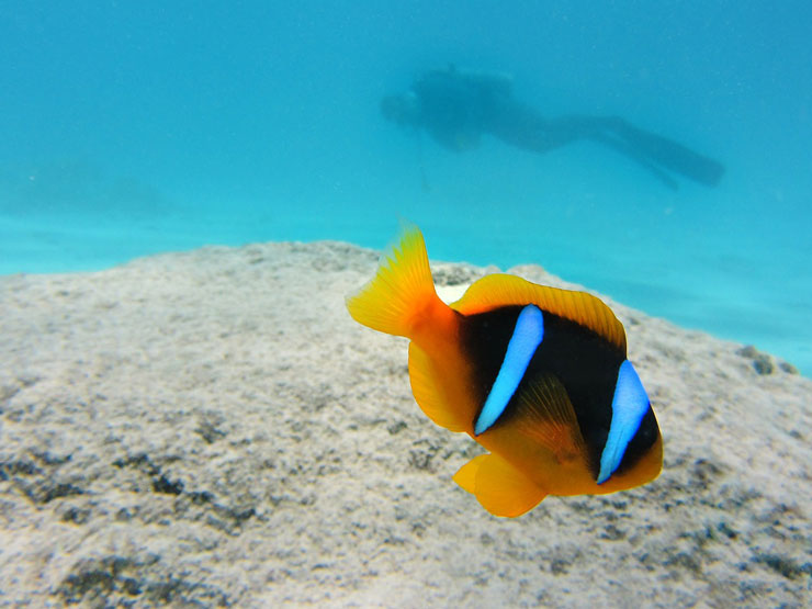Diving in the Philippines